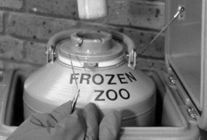 frozen zoo