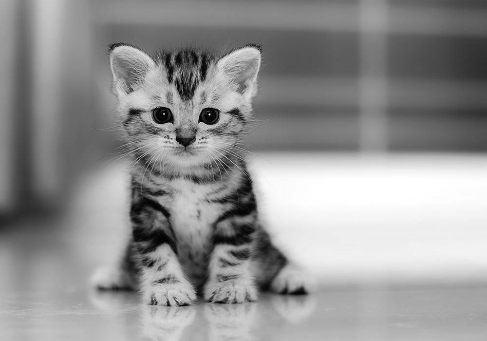 4-ways-cheer-up-depressed-cat